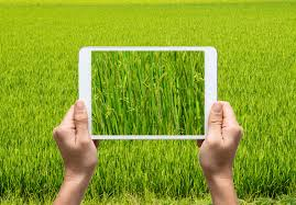 agriculture et logiciel